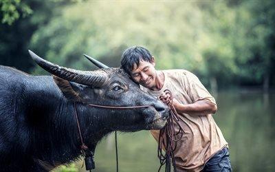Домашние животные, Человек, Буйвол, Таиланд