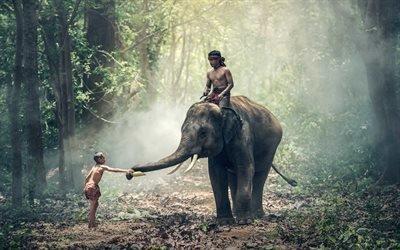 Лес, Дорога, Солнечный луч, Слон, Дети, Таиланд