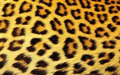 леопард, шерсть, пятна, текстура