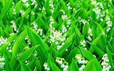 цветы, Ландыши, текстура