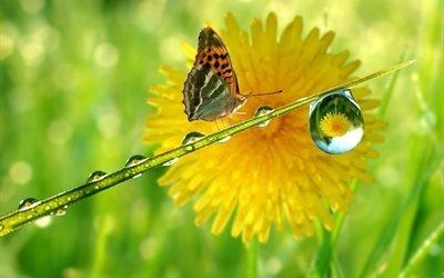 отражение, стебель, одуванчик, капля, бабочка, вода