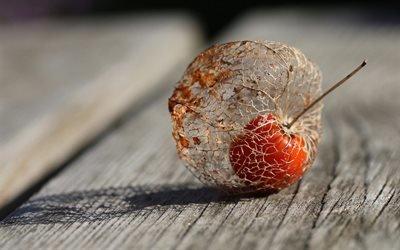 макро, доски, физалис, плод