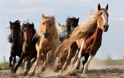 лошади, табун, кони, красиво