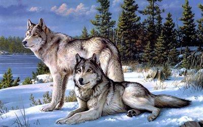 пара, волки, серые