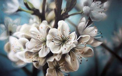 яблоня, цветение, цветы