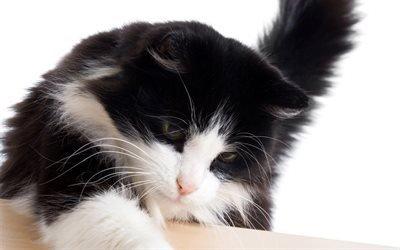 кот, котяра, усы, лапы, хвост