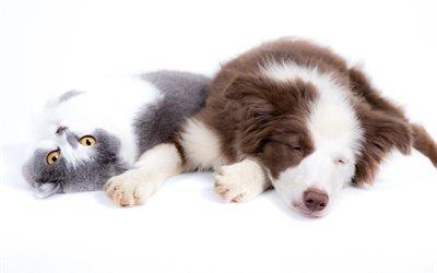 Домашние любимцы, Кошка, Собака