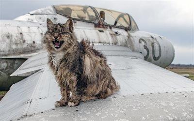 Домашние животные, Кот, Старый ржавый МиГ