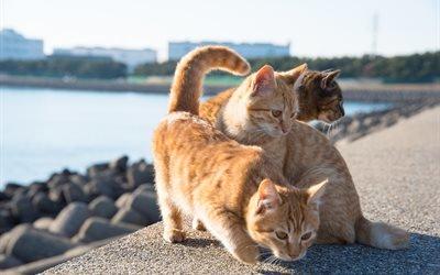 животные, коты, кошки, город, набережная