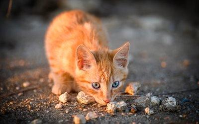 животное, кот, кошка, камешки