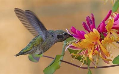 птица, колибри, ветки, цветы