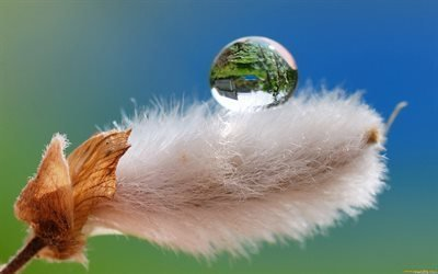 цветок, верба, капля, вода, отражение, ветка