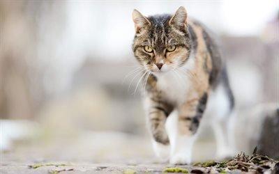 кошка, боке, домашние животные, коты