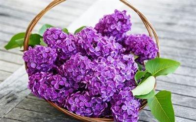 бузок, весняні квіти, букет бузку, сирень, весенние цветы, букет сирени