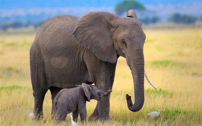 маленький слоник, слониха, слоны, Африка, цапли