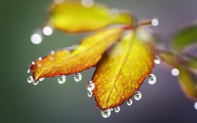 природа, листья, вода, капли, макро