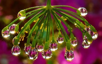 цветок, капля, вода, отражение, ветка, солнце