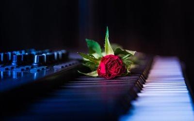музыка, инструмент, клавиши, цветок, роза