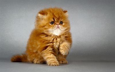 котик, милые животные, рыжий котенок, коты