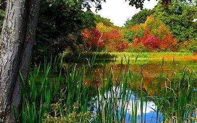 лес, озеро, деревья, отражение, живописный, природа, осень, небо