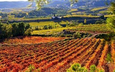 Испания, Каталония, плантации, виноградники, осень