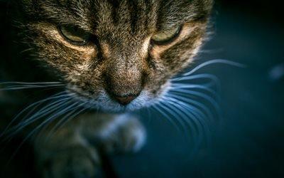 Домашние животные, Полосатый кот, Морда