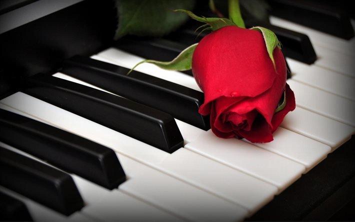 рояль, клавиши, роза