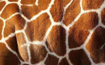 Шкура, Жираф, Текстуры