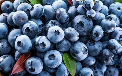 чорниця, макро, ягоди, фіолетові ягоди чорниці, черника, ягоды, фиолетовые ягоды черники