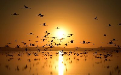 Закат, Фламинго, Озеро Туз, Турция, Flamingos, Lake Tuz