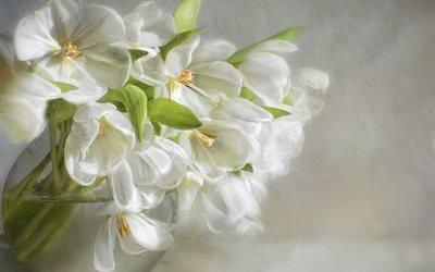 живопись, цветы, ваза