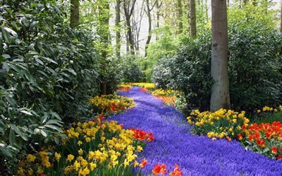 парк, деревья, поляна, цветы, весна
