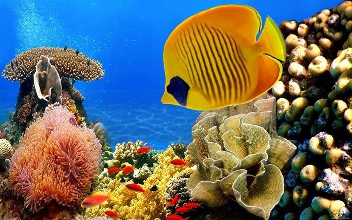 Мир в океане підводний світ в океані