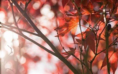 Осень, Парк, Деревья, Листья