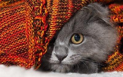 животное, кот, кошка, глаз, ткань