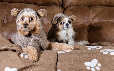 собаки, животные, пудель, чихуахуа, пара, диван, одежда, следы