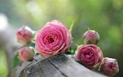 бревно, цветы, розы