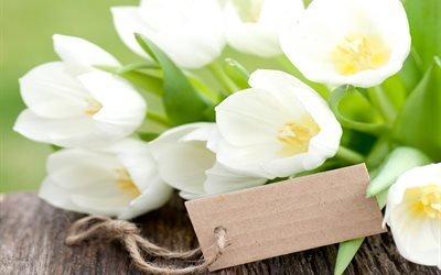 цветы, тюльпаны, доска
