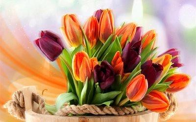 ведро, цветы, тюльпаны, боке