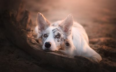 животное, пёс, собака, взгляд, природа, коряга