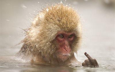 животное, обезьяна, макака, вода, купание, снег, палец