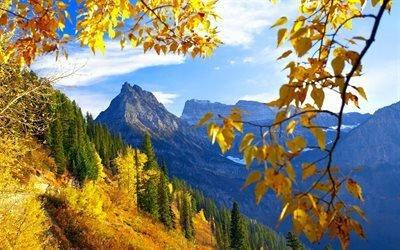 природа, осень, деревья, лес, ветка, листья, небо, облака