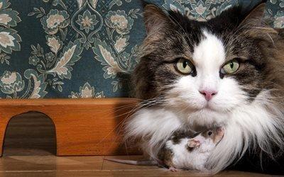 животные, кот, кошка, мышь, нора