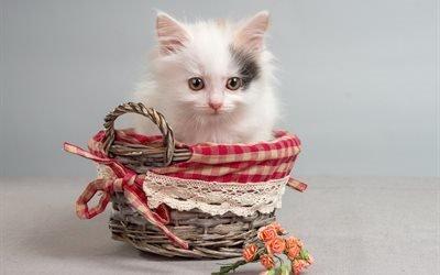 корзинка, животное, котёнок, цветы