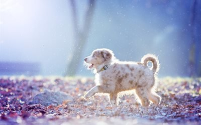 природа, листья, снег, собака, пёс, щенок, овчарка, прогулка