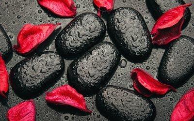 СПА, черный камни, лепестки, капли, 4K
