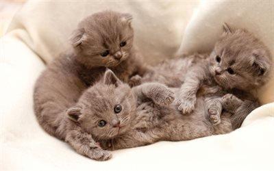 Маленькие, серые, котята, Маленькі, сірі, кошенята