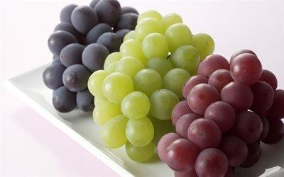 виноград, сорты, сорт