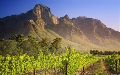 горы, виноградник