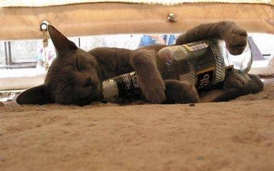 кот, бутылка